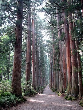 Tree lined path to the Togakushi shrine1.jpg