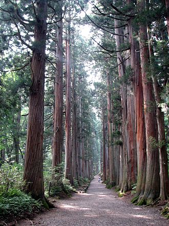 Togakushi Shrine - Planted in the 17th century, the cedar-lined approach to the upper shrine Oku-sha