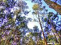 Trees (5540074771).jpg