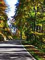 Trees - panoramio (42).jpg