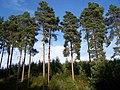 Trees Near Upper Cliff - geograph.org.uk - 236312.jpg