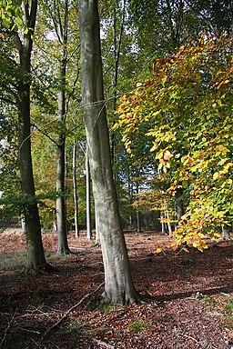 Trees at Swaffham Heath - geograph.org.uk - 1025863