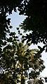 Trees in Baghdad.jpg