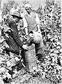 Trgačica stresa grozdje iz škafa nosaču v brento 1928.jpg