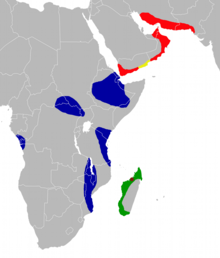 Triaenops has a fragmented distribution in Africa, the Middle East, and southern Pakistan.
