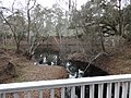 Tributary and Suwannee River just North of White Springs Bath site.JPG