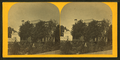 Two women talking in the garden, from Robert N. Dennis collection of stereoscopic views 2.png