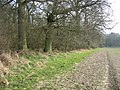Typical woodland - field boundary - geograph.org.uk - 1240614.jpg