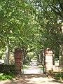 UMD walkway trees.JPG