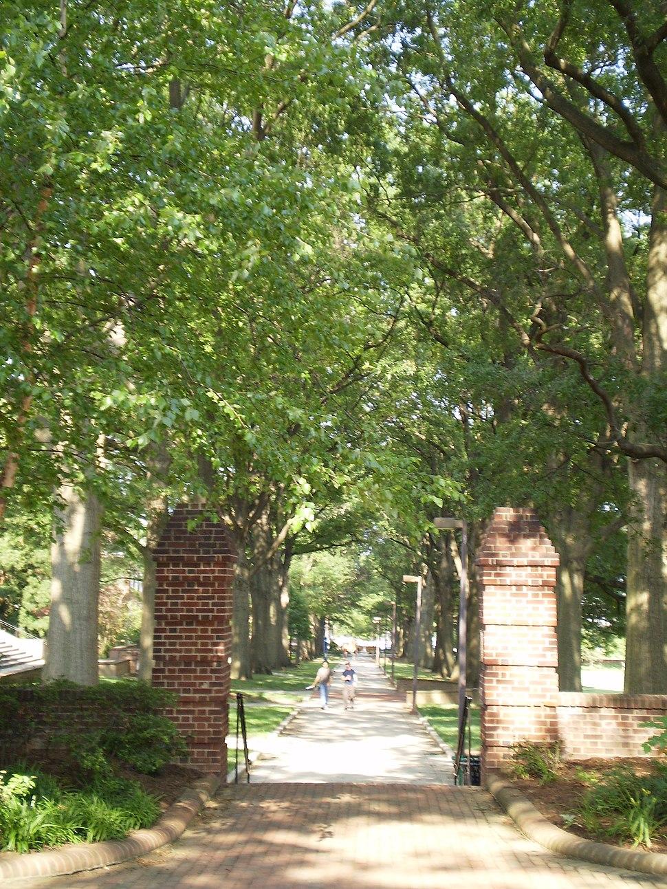 UMD walkway trees