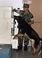 US Navy 050629-N-3122S-002 Master-at-Arms 3rd Class Shanna Brown and her Military Working Dog, Britt, conduct a drug sweep.jpg