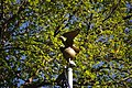 US Post Office-Longview Main flagpole eagle finial 01.jpg