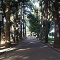 Uma parte dos jardim do Palácio do Catete.jpg