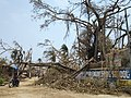 Uprooted Trees due to Cyclone Fani near Narendra Puskarini, Puri..jpg