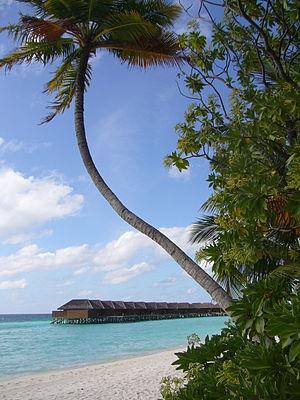 Alif Alif Atoll - Veligandu Island resort
