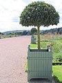 Versailles Jardiniere in Trentham.jpg