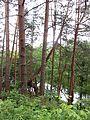 Vievio sen., Lithuania - panoramio (26).jpg