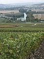 Vignes (vue sur la Marne depuis Hautvillers.51) Cl.J.Weber01 (23651571816).jpg