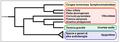 Viticoideae - Cladogramma della sottofamiglia.png