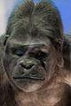 WLANL - kwispeltail - Gorilla.jpg