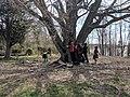 WW Oak Tree Hug TMS.jpg