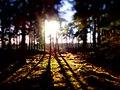 Wald bei Hemslingen.jpg