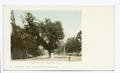 Washington Elm, Cambridge, Mass (NYPL b12647398-62671).tiff