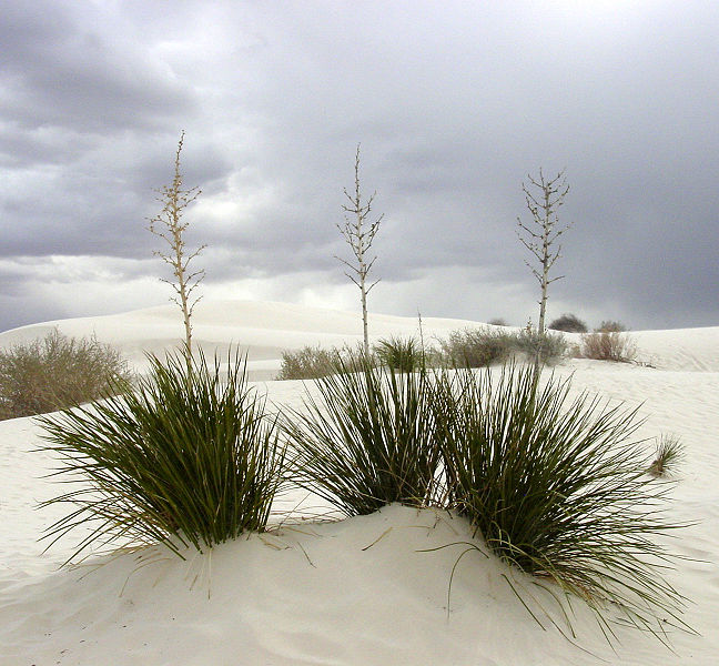 http://upload.wikimedia.org/wikipedia/commons/thumb/6/61/White_Sands_New_Mexico.jpg/648px-White_Sands_New_Mexico.jpg