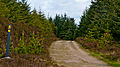 Wicklow Way Conifer Plantation.jpg