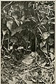 Wild nature's ways (1903) (14748354034).jpg