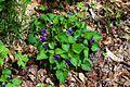 Wildflowers3 - West Virginia - ForestWander.jpg