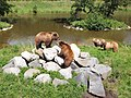 Wildpark Poing - bears 2.jpg