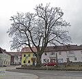 "Winter-Linde ""Dorflinde"" in St. Leonhard bei Freistadt.jpg"