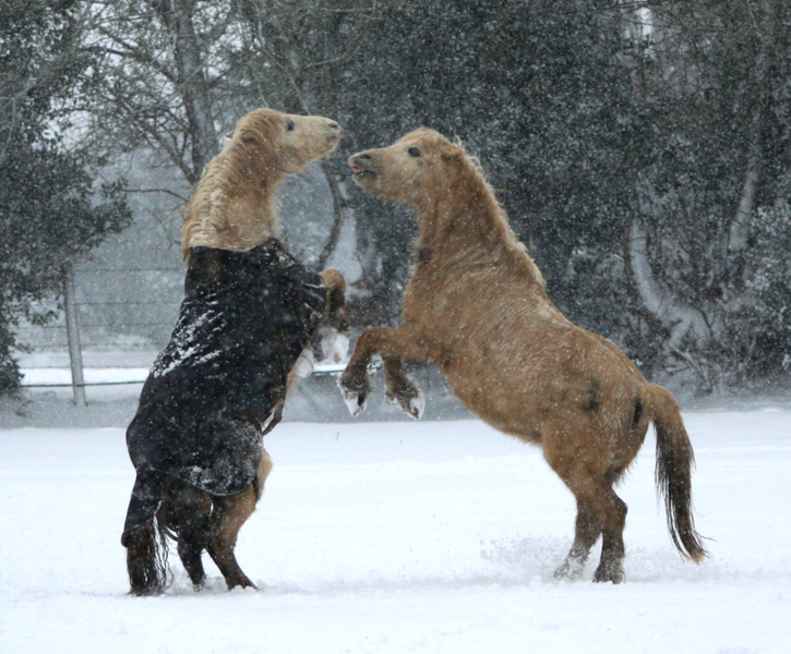 File:Winter play.png