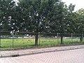Woerden - panoramio (19).jpg