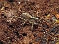 Wolf Spider (48377389461).jpg