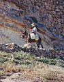 Woman on a donkey in Tunisia.jpg