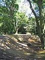 Woodland, Thorndon Park, Brentwood - geograph.org.uk - 53132.jpg