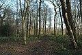 Woodland near Delf House, SE of Hoylandswaine - geograph.org.uk - 113584.jpg