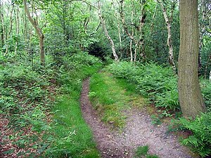 English: Woodland path