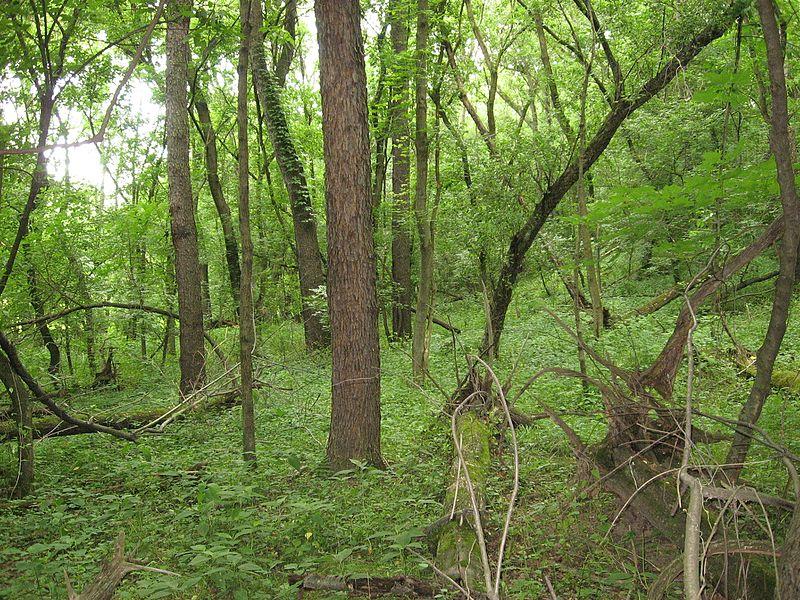 File:Woods Along US 19 - panoramio.jpg