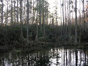 Carolina bay - Woods Bay State Park, South Carolina, winter twilight