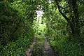 Yealmpton, overgrown track - geograph.org.uk - 879442.jpg