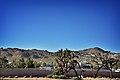 Yucca Valley Hwy 247.jpg