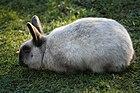 Zoo Praha 2011-01-16 - 4051.jpg