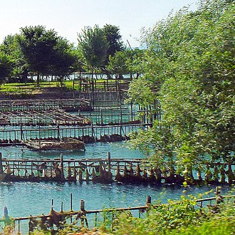 Agriculture in Albania - Fish farming in Zus, Shkodër County.