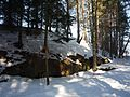 Část lesa a skála pod kopcem Kněžovec 03.jpg