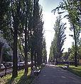 Бульвар Шевченка 02.JPG