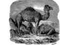 Верблюд 1 (БЭАН).png