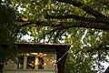 Віття дуба крупноплідного та дах прокуратури на вул. 28 Червня, 71, м. Чернівці. Знято на світанку.jpg